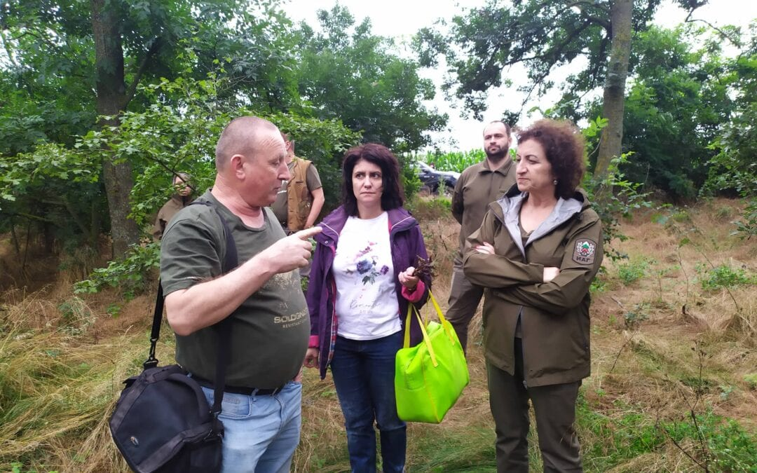 Examining the condition of the ash forest belts in North-eastern Bulgaria